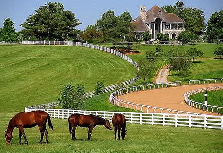 Popular Horse Farms Around Lexington